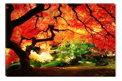 Startonight-Wall-Art-Canvas-Red-Maple-Nature-Trees-USA-Design-for-Home-Decor-Dual-View-Surprise-Artwork-Modern-Framed-Ready-to-Hang-Wall-Art-2362-X-3543-Inch-100-Original-Art-Painting-0
